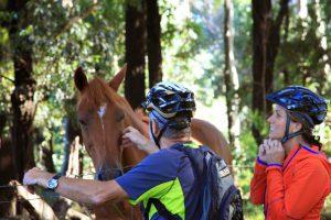 self-guided haleakala bike tours