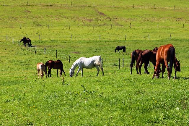 pasture-431719_640