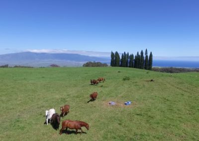 Upcountry Maui Self Guided Tour
